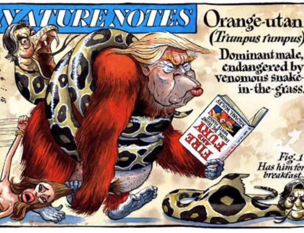 Orange-Utan